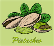 Nut pistachio. Hand drawing set of vector sketches Stock Photography