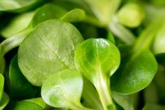 Nut salad Stock Photo