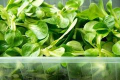 Nut salad Royalty Free Stock Image