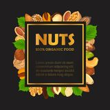 Nut banner with kernel and shell, sign. Nut and seeds without shells for poster. Banner with walnut and almond, pistachio and hazel, pecan and filbert Royalty Free Stock Photos