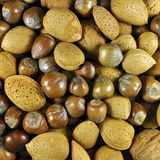 Nut selection background Stock Images