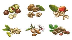 Nut set Royalty Free Stock Images