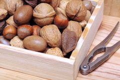 Nuts in shell Royalty Free Stock Photography