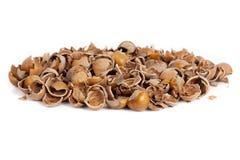 Nut shells Royalty Free Stock Photos