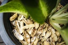 Nut shells in flowerpot. For fertilizer royalty free stock photos