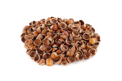 Nut shells Stock Images