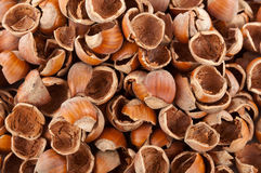 Nut shells Stock Image