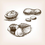 Nut sketch style vector illustration Stock Photography