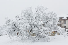 Nut tree which is filled up by snow Stock Image