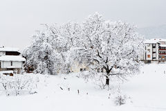 Nut tree which is filled up by snow Royalty Free Stock Image