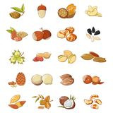 Nut types food icons set, cartoon style. Nut types food icons set. Cartoon illustration of 20 nut types food vector icons for web Vector Illustration