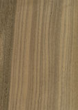Nut wood veneer texture Stock Photography