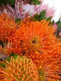 Nutan flower Stock Images
