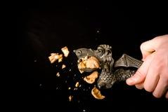 Nutcracker. Break nuts with nutcracker on a black background Stock Photo