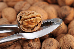 Nutcracker on Pile of Walnuts Stock Photos