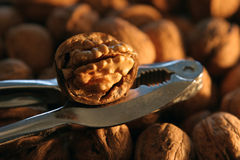 Nutcracker on a Pile of Walnuts-2 Stock Images