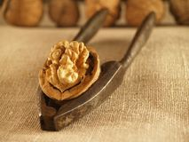 Nutcracker and walnut Stock Image