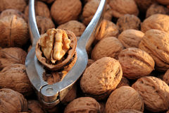 Nutcracker and Walnuts royalty free stock images