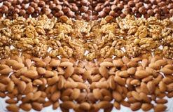 Nute-Hintergrund Lizenzfreie Stockfotos