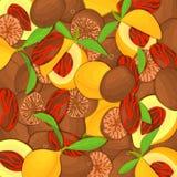 nutemeg背景 接近留间隔的可口香料胡说的传染媒介例证 样式,在壳的肉豆蔻果子 免版税库存图片