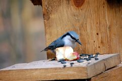 Nuthatch Stock Foto's