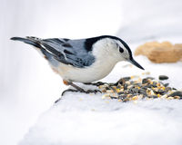 Nuthatch stock photos