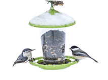 Nuthatch and Chickadee on Snow capped birdfeeder. White-breasted nuthatch Sitta carolinensis eyes a Black-capped chickadee, Poecile atricapillus eye each other Royalty Free Stock Photography