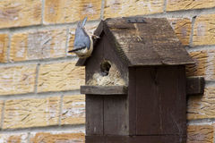 Nuthatch Stock Photography