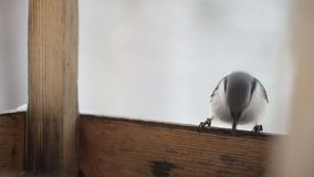 Nuthatch On The Bird`s Feeding Trough. Winter Forest Royalty Free Stock Image
