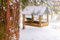 Nuthatch, Sitta europaea sits on feeder covered snow in winter forest. Stock Photo