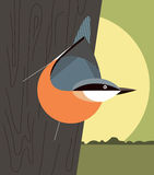 Nuthatch on the trunk of a tree Royalty Free Stock Photo