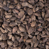 Nutmeg background Stock Photos