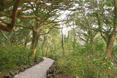 Nutmeg Forest park in Jeju Island Stock Image