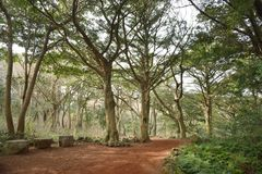 Nutmeg Forest park in Jeju Island Royalty Free Stock Photography