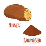Nutmeg fruit, organic nut, ground seed, powder. Vector illustration Royalty Free Stock Photos