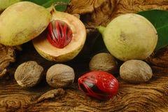 Nutmeg fruits Stock Images