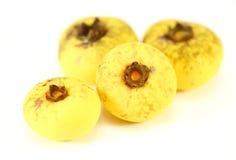 Nutmeg Myristica fragrans Houtt Stock Image