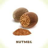 Nutmeg nut isolated on white Royalty Free Stock Photography