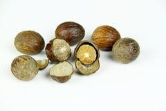 Nutmeg odosobniony biel na tle Zdjęcie Royalty Free