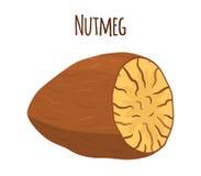 Nutmeg, organic nut, healthy vegetarian food. Cartoon style. Vector illustration Stock Photos