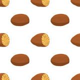 Nutmeg, organic nut, healthy vegetarian food seamless pattern. Vector illustration Royalty Free Stock Image