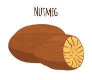 Nutmeg, organicznie dokrętka, zdrowy jarski jedzenie Kreskówka styl również zwrócić corel ilustracji wektora Fotografia Royalty Free