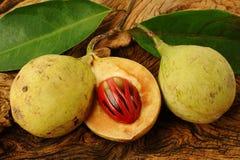 Nutmeg owoc Fotografia Royalty Free