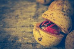 Nutmeg with placenta-like cover of seed of myristica fragrant on Royalty Free Stock Images