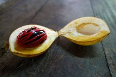 Nutmeg raw at the island of Grenada. Nutmeg raw at the carribean island of Grenada Stock Photos