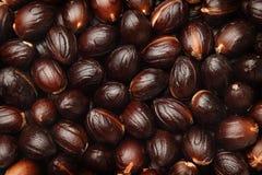 Nutmeg seed background Royalty Free Stock Photography