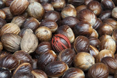 Nutmeg. Seeds for horizontal background royalty free stock photography