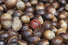 Nutmeg Royalty Free Stock Photography