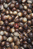 Nutmeg. Seeds for vertical background Royalty Free Stock Photography