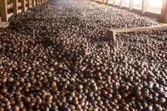Nutmeg som sorterar kuggen i gammal fabrik royaltyfria bilder
